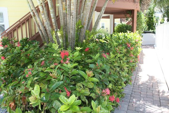 Anna Maria Beach Cottages: beautifully kept gardens