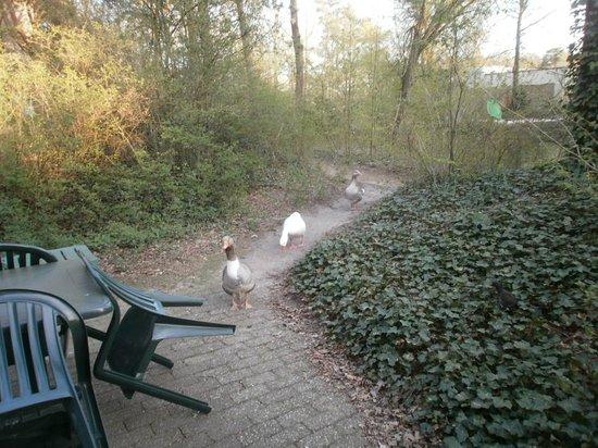 Center Parcs Erperheide: vue du cottage