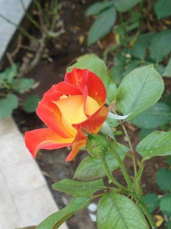 Riad Jean Claude: le jardin des roses