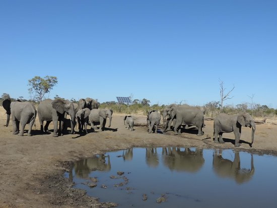 Somalisa Camp : Elephants everywhere