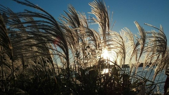 Delavan Lake Resort: Sunset in October