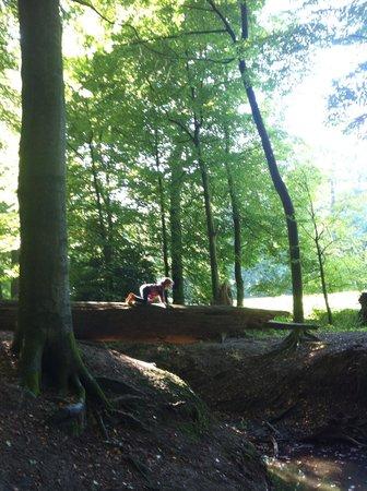 Park Sonsbeek: Sonsbeek park