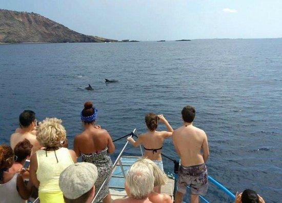 Aquabus Ferry Boats: delfines en aquabus