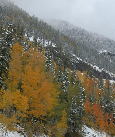 Weminuche Wilderness Area: fall colors with winter weather