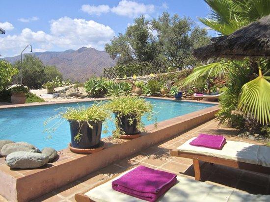 Casa Limones & Los Olivos: Pool Garden