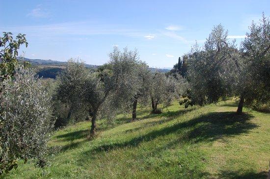 Villa Casa Di Monte: Olive trees everywhere around the villa