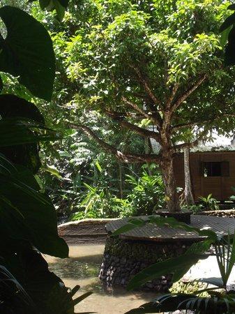 El Almejal Lodge & Natural Reserve: Piscina natural