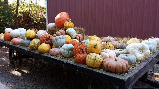 Butler's Orchard: Fall Harvest