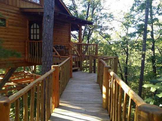 Treehouse Cottages: first view