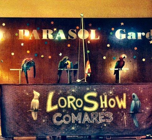Hotel Parasol Garden: Parrot's show