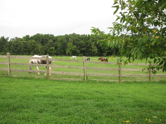The Inn at Rosehill & Rosehill Stables: Horses in the field at Rosehill