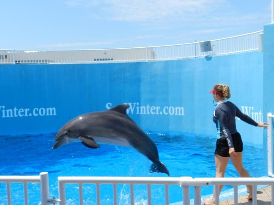 Clearwater Marine Aquarium Picture Of Clearwater Beach