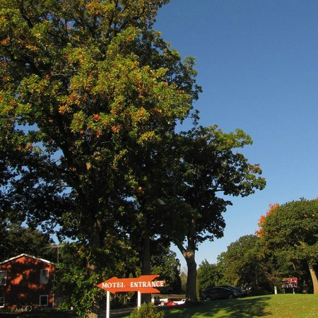 Royal Oaks Motel: Majestic Oaks Surround the Grounds