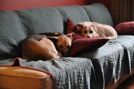Casa Moro: comfy