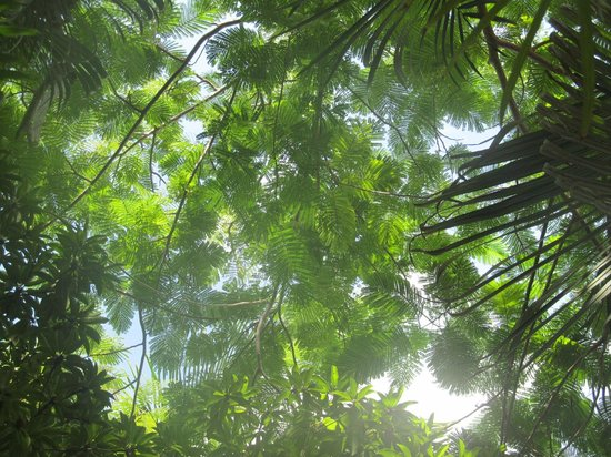 Key West Harbor Inn: Looking straight up from my adirondack chair at pool