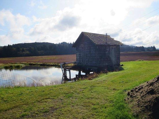 Walsh Motel: Grayland cranberry bog at harvest time