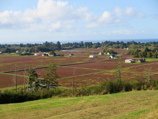 Walsh Motel: Grayland's cranberry bogs