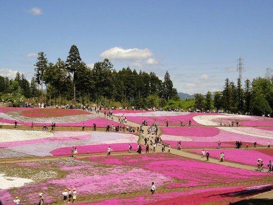 Chichibu, اليابان: 羊山公園