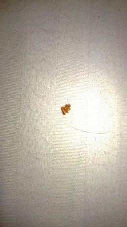 Shree Guru Residency: Bed Bug