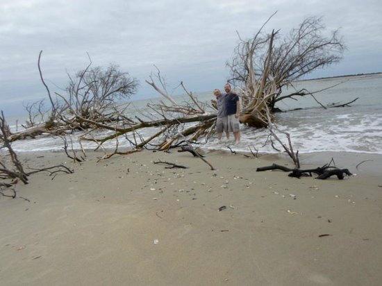 Rover Boat Tours - Carolina Rover: Awesome driftwood on the beach