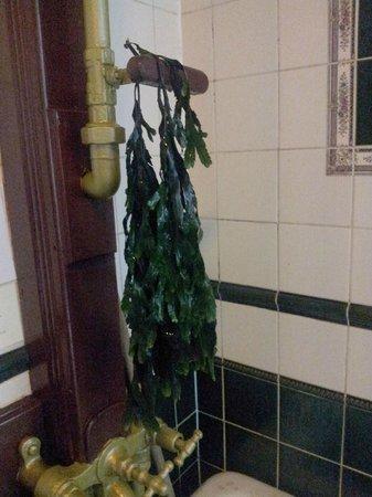 Kilcullen's Seaweed Baths : Seaweed.