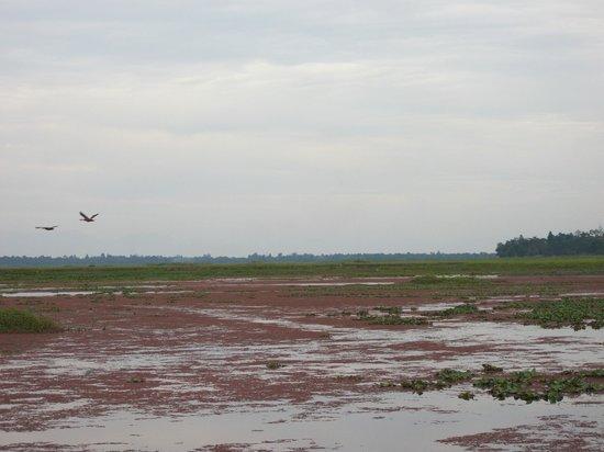 Dibru Saikhowa National Park: Migratory Birds