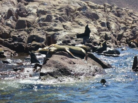 Espiritu & Baja Tours: Sea lions!