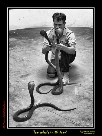 Phuket Cobra Show and Snake Farm: Two in the hand is worth ?