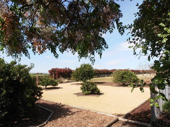 The Citrus garden