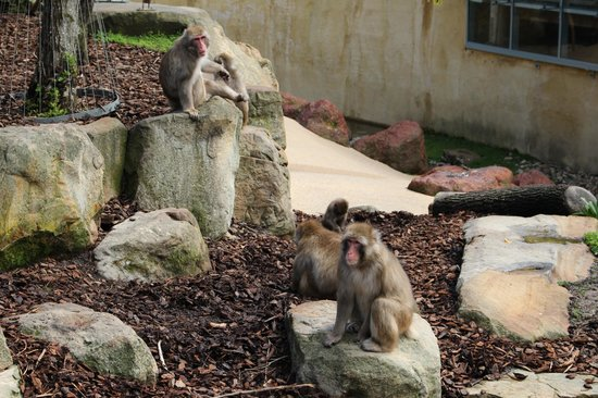Mantra Charles Hotel: Monkeys in City Park , Lauceston