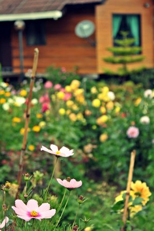Kiram's Village : beautiful flowers