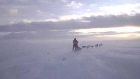 Northern Lights Husky Day Tours: Finnmarksvidda