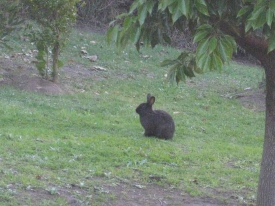 Whalesong Hotel & Spa: Whalesong rabbits