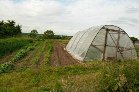 Fort House B & B : Polytunnel vegetable garden