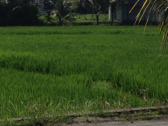 Amandari: Greenest grass on the planet