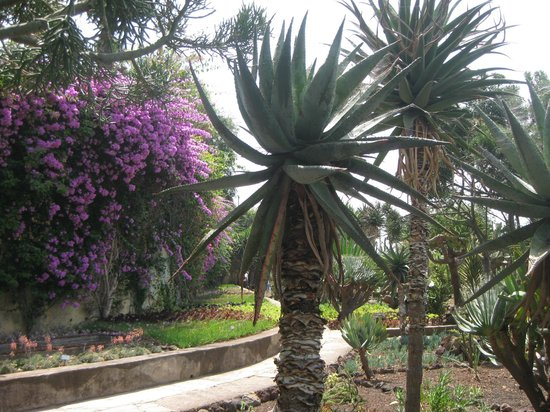 Madeira Botanical Garden : Пальмы со всего света!