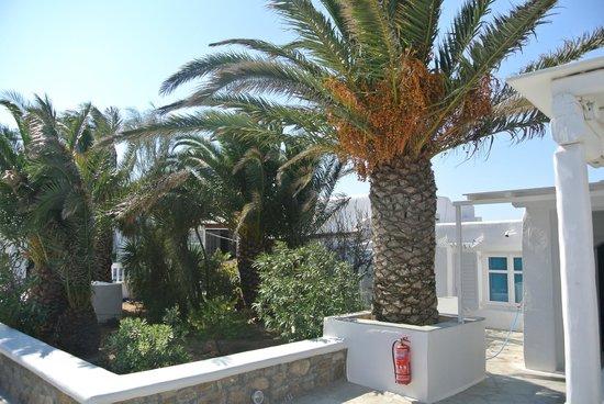 Milena Hotel: outdoor
