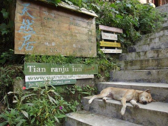 LongJi Terraces Tian ranju Inn: the inn