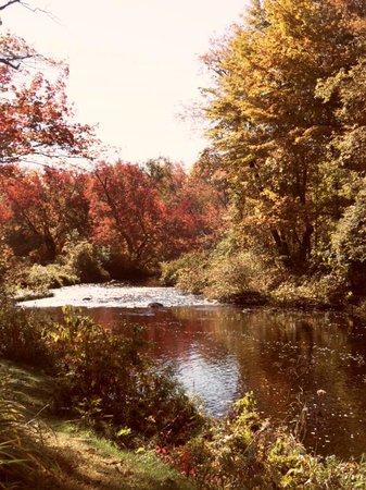 Little River Bed and Breakfast : Little River's back garden...