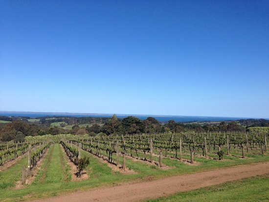 Max's Retreat at Red Hill Estate: The stunning view from the balcony