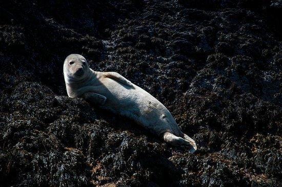 Baltimore Sea Safari : Common Seal