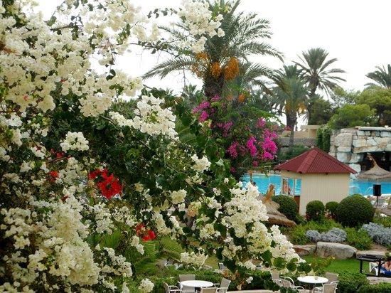 Tui Magic Life Africana : Foliage around the pool