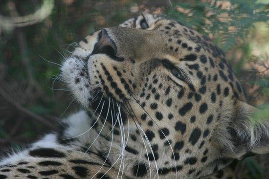 Tenikwa Wildlife Awareness Centre: spotted beauty