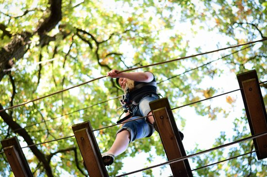 Бимиш, UK: Treetop Adventure Beamish