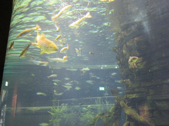 Museum of Natural History: circular fish tank