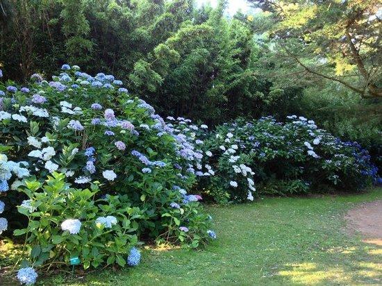 la jasmin grimpant photo de jardin botanique de vauville. Black Bedroom Furniture Sets. Home Design Ideas
