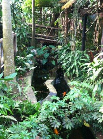 Umlilo Lodge B&B : Coy pond