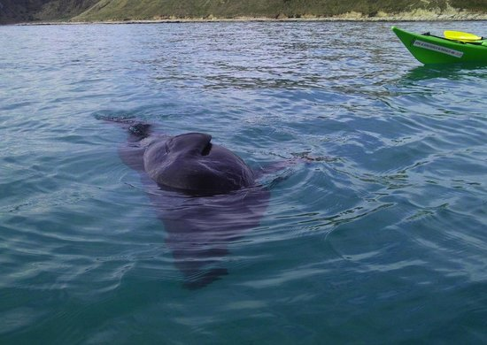 Kaikoura Kayaks: Relaxing on a sunny Saturday in September with one of the locals