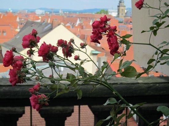 Rosengarten der Neuen Residenz: Rose Garden at the New Residenz・・・薔薇越に見る旧市街