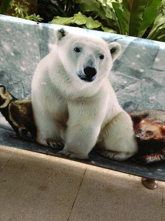 The bear at Singapore Zoo